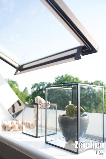Windlicht-Kaktus-Fensterbank