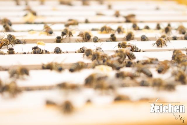 MünsterABC-Honig-Bienen-Waanders